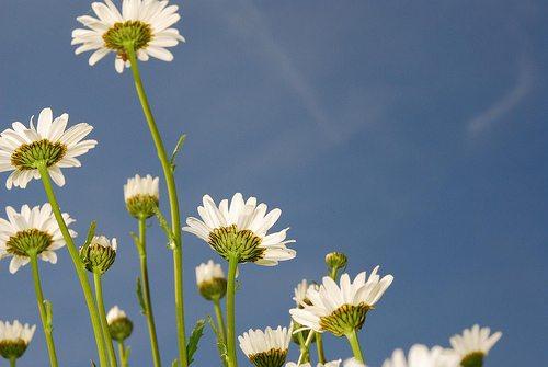 Flowers Flash Below